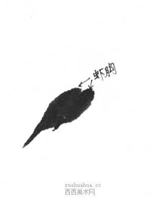 国画虾怎么画?水墨画虾的画法步骤教学(2)