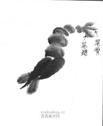 国画虾怎么画?水墨画虾的画法步骤教学(8)