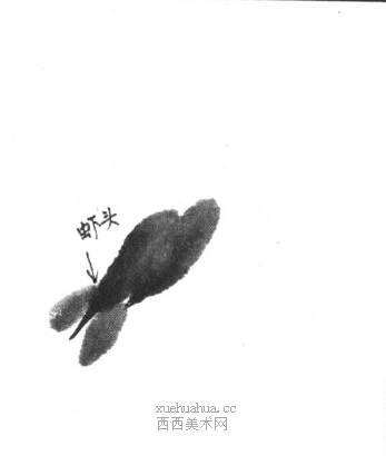国画虾怎么画?水墨画虾的画法步骤教学(3)