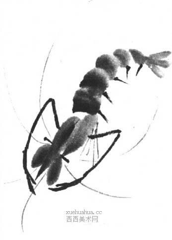 国画虾怎么画?水墨画虾的画法步骤教学(16)