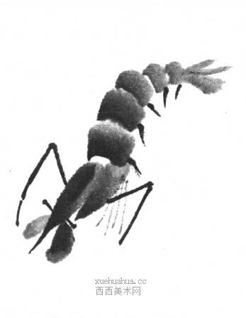 国画虾怎么画?水墨画虾的画法步骤教学(14)