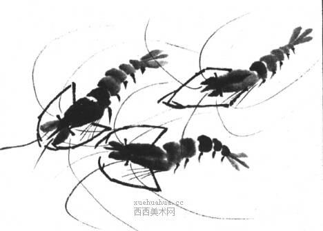 国画虾怎么画?水墨画虾的画法步骤教学(17)