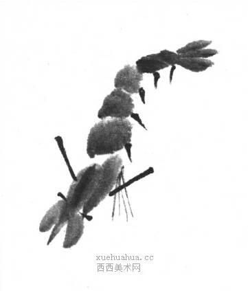 国画虾怎么画?水墨画虾的画法步骤教学(13)