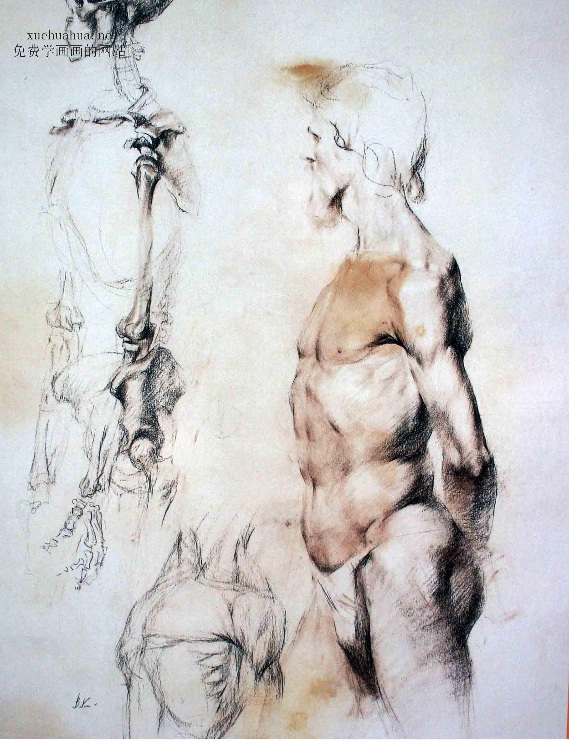 列宾学院素描头像-人体结构