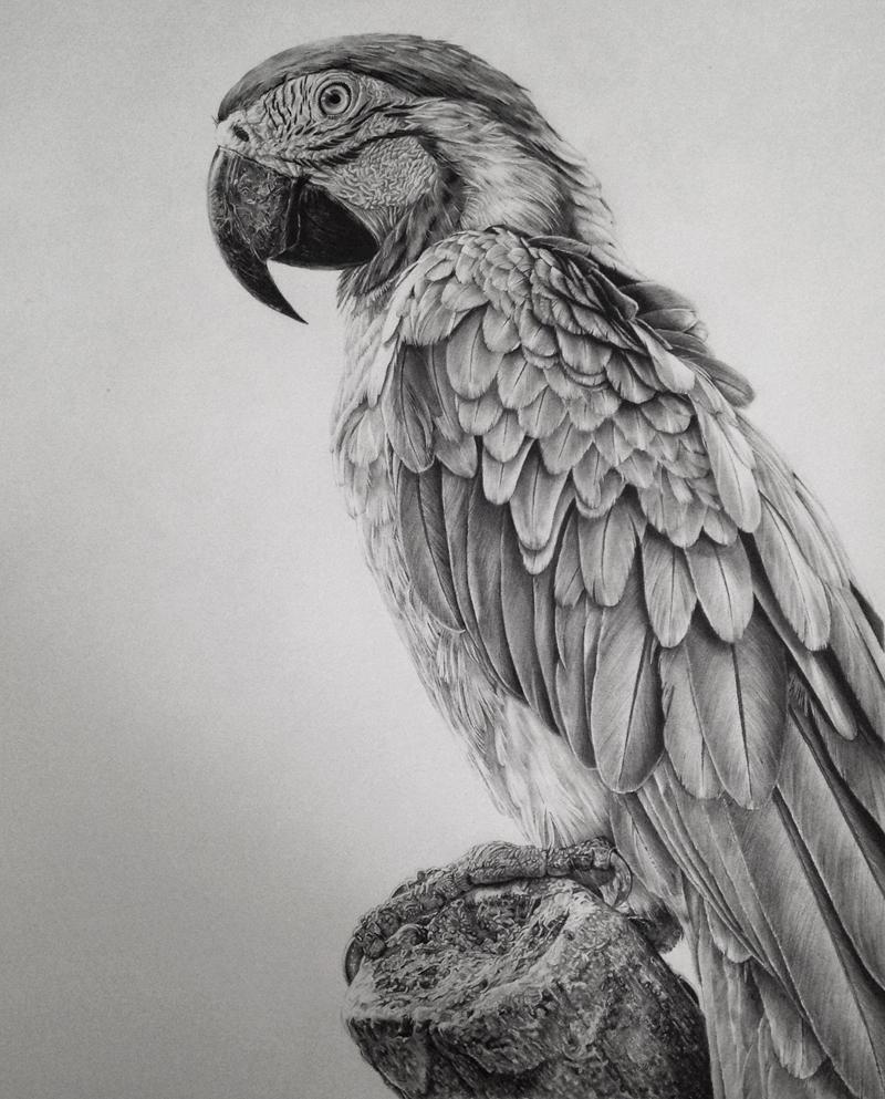 Monica Lee超写实素描作品欣赏-鸟类