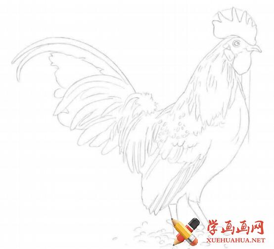 彩铅画鸡详细步骤(2)