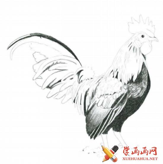 彩铅画鸡详细步骤(3)