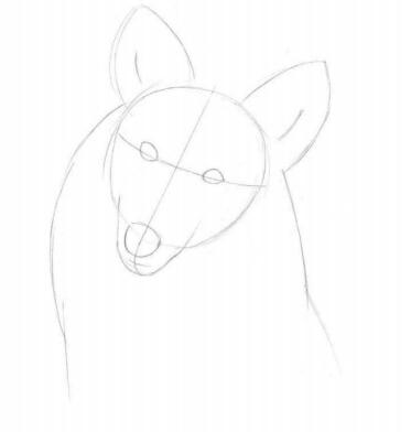 彩铅画动物教程:喜乐蒂牧羊犬画法【详细步骤】(1)