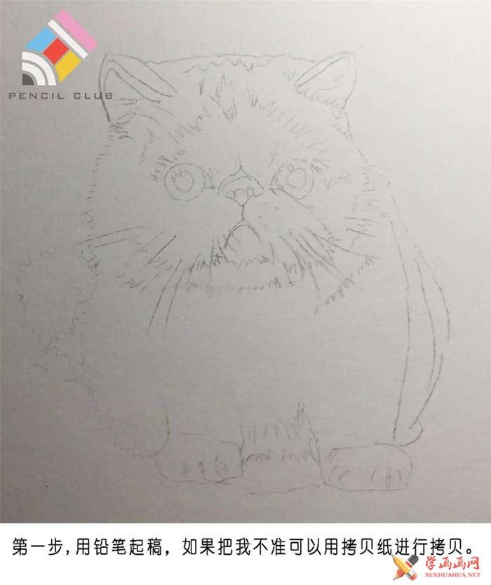 彩铅画教程:教你手绘一只加菲猫(1)