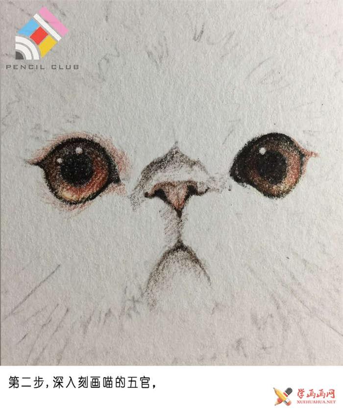 彩铅画教程:教你手绘一只加菲猫(2)