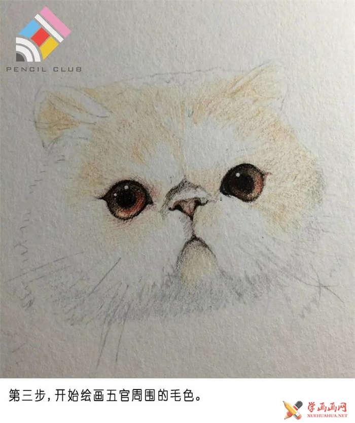 彩铅画教程:教你手绘一只加菲猫(3)