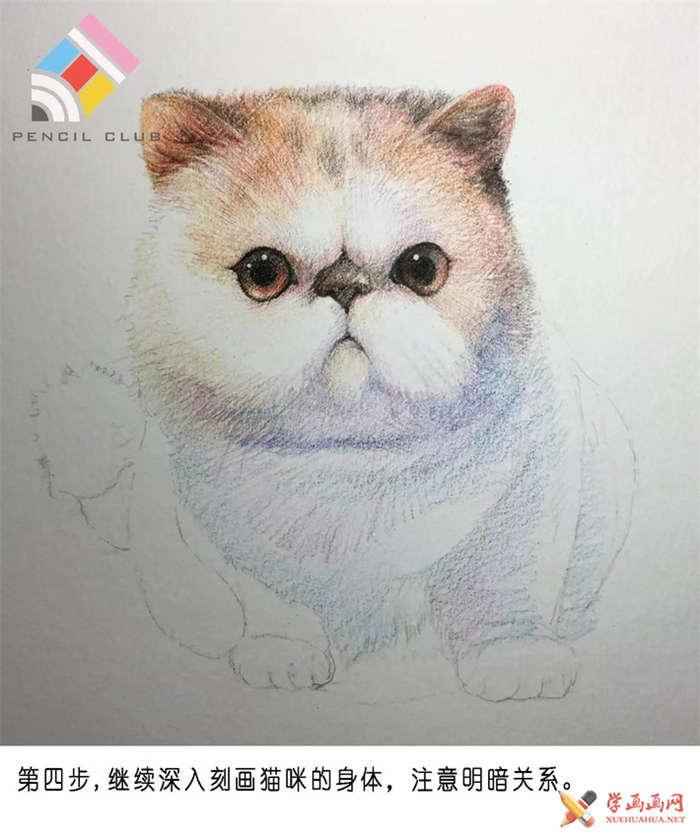彩铅画教程:教你手绘一只加菲猫(4)