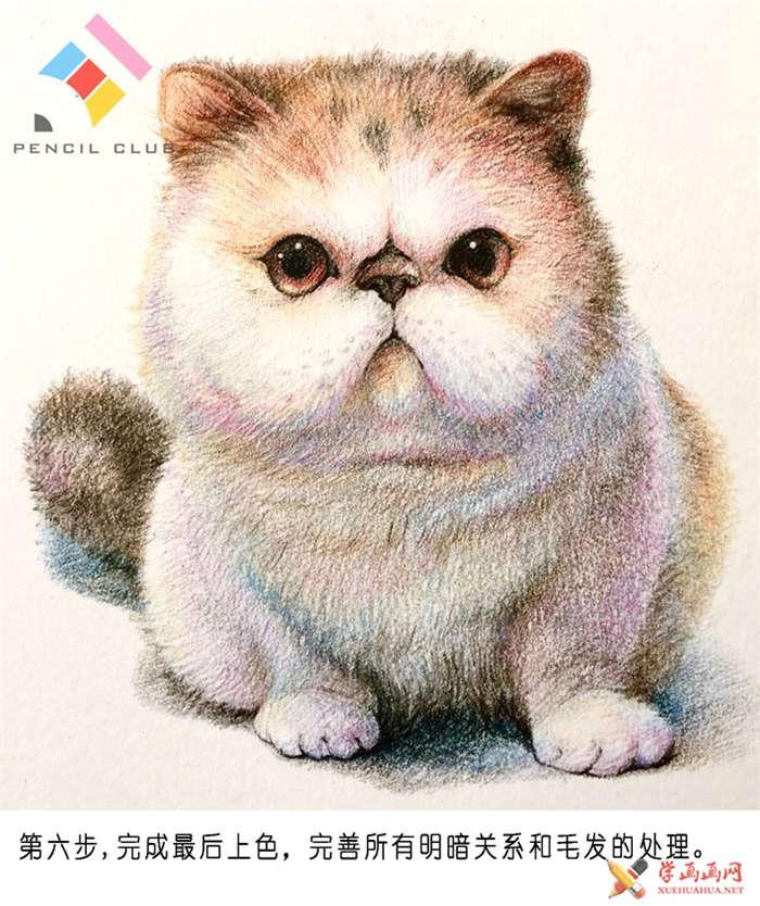 彩铅画教程:教你手绘一只加菲猫(6)