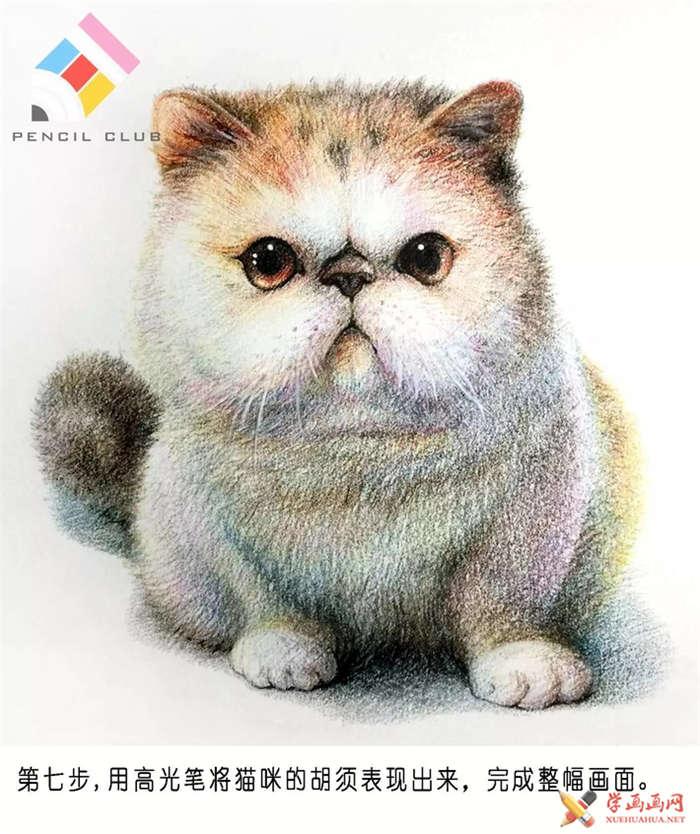 彩铅画教程:教你手绘一只加菲猫(7)