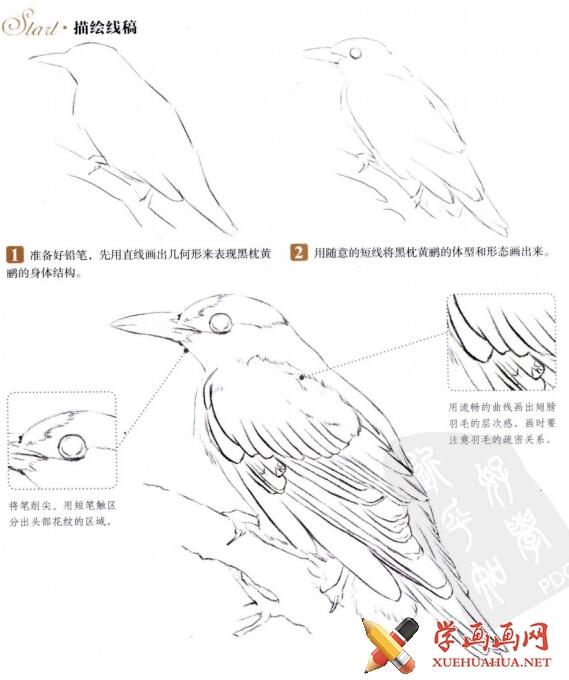 《鸟之绘-38种鸟的色铅笔图绘》pdf电子书下载(1)