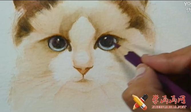 彩铅画视频教程:写实可爱猫咪的画法(1)