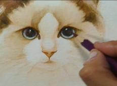 学画画视频:写实可爱猫咪的彩铅画法