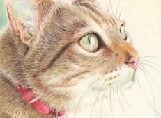 一组猫咪彩铅画欣赏【12P】