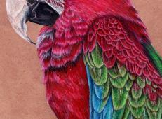 关于鸟的彩铅画图片欣赏
