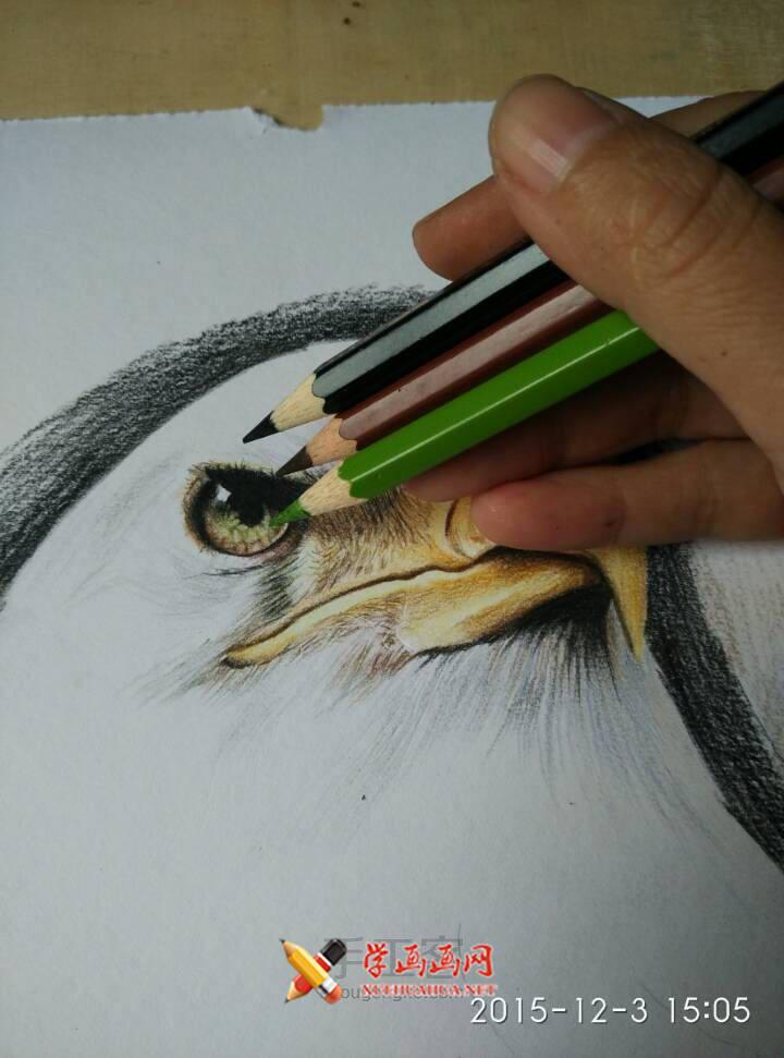 彩铅画教程:彩铅手绘白头海雕步骤(3)