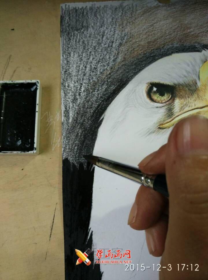 彩铅画教程:彩铅手绘白头海雕步骤(7)