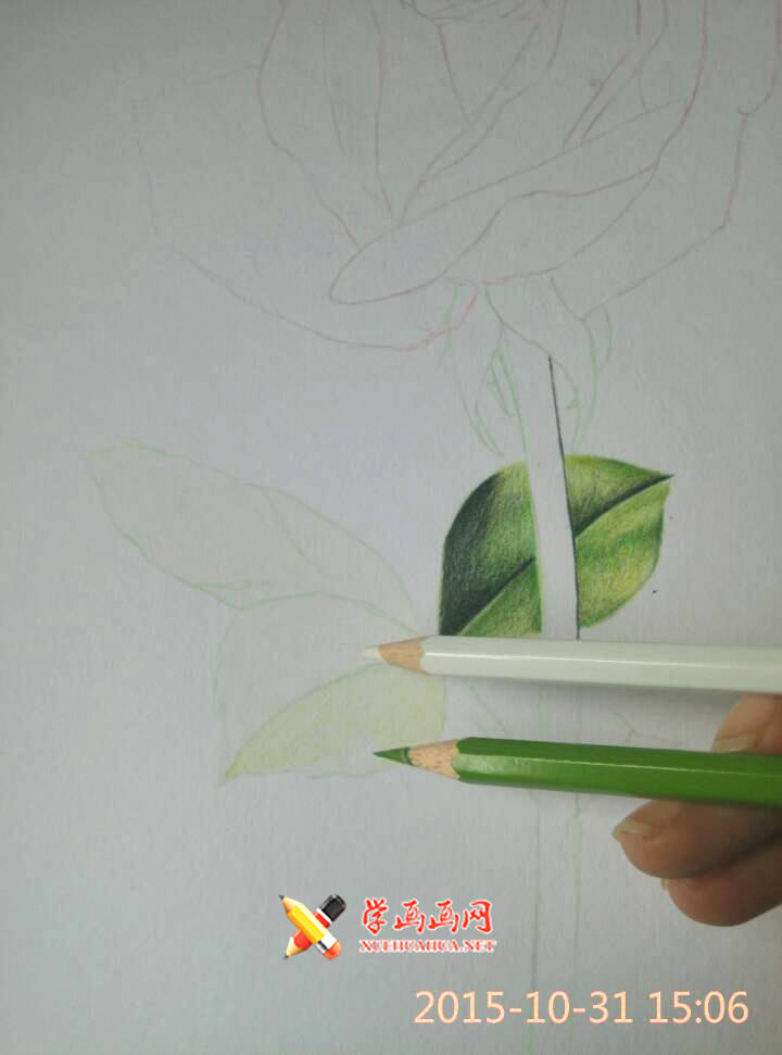 彩铅玫瑰花作画步骤__彩铅画
