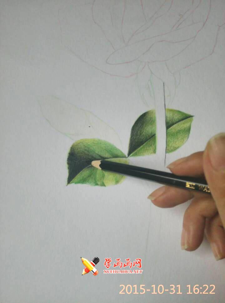彩铅玫瑰花作画步骤(2)