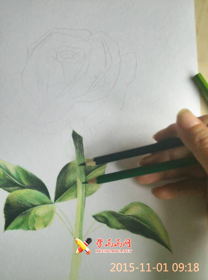 彩铅玫瑰花作画步骤(3)