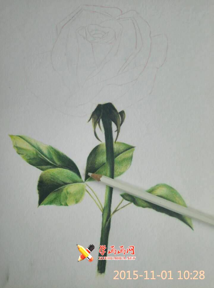 彩铅玫瑰花作画步骤(4)
