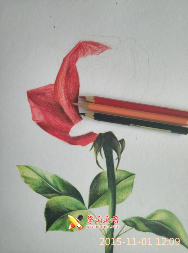 彩铅玫瑰花作画步骤(5)