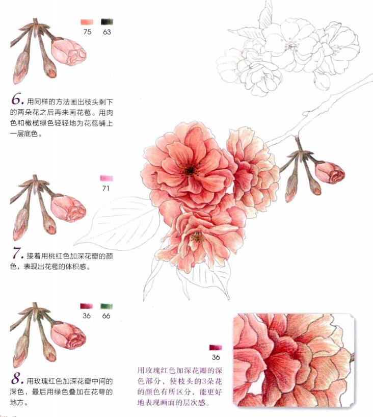 彩铅画花卉绘画教程(1)