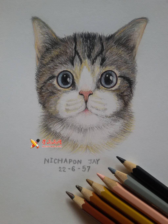 3幅萌猫彩铅画图片欣赏(1)