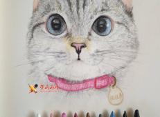 3幅萌猫彩铅画图片欣赏