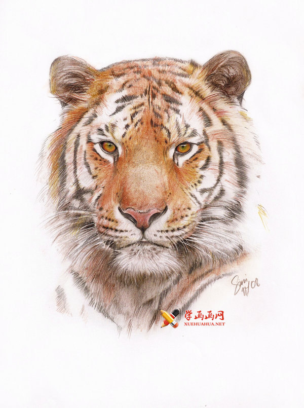 彩铅画老虎图片欣赏(1)