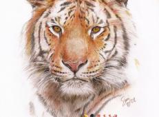 彩铅画老虎图片欣赏