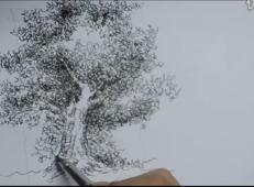 钢笔画单体视频教程:怎么画树