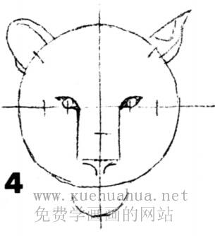 老虎的画法(4)