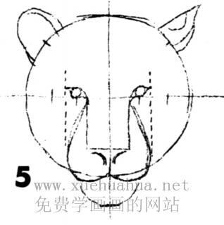 老虎的画法(5)