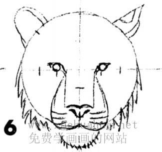 老虎的画法(6)