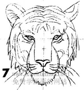 老虎的画法(7)
