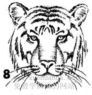 老虎的画法(8)