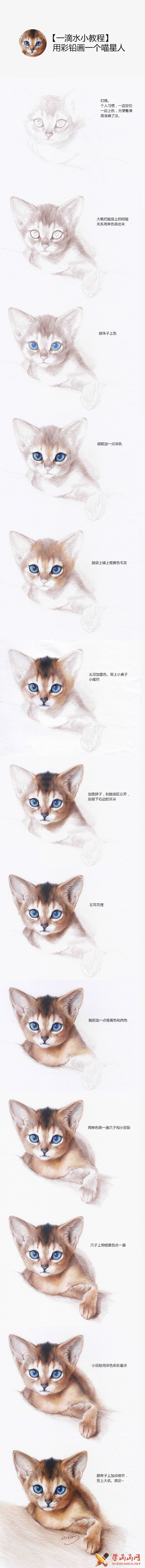 彩铅猫的画法(1)