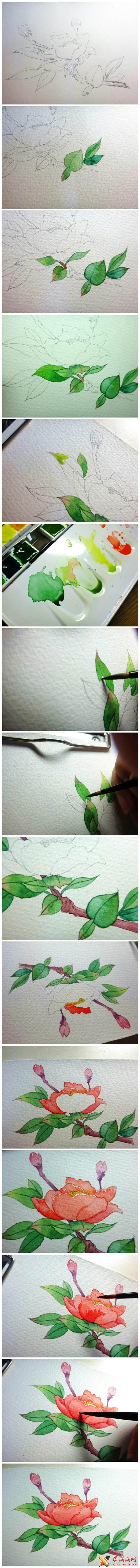 水彩画牡丹教程(1)