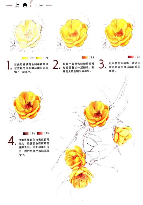 彩铅画教程_彩铅植物的画法