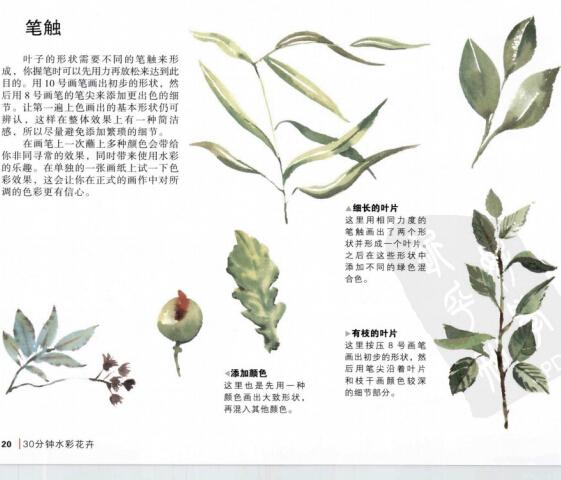 水彩画教程_柯林斯30分钟水彩花卉(1)
