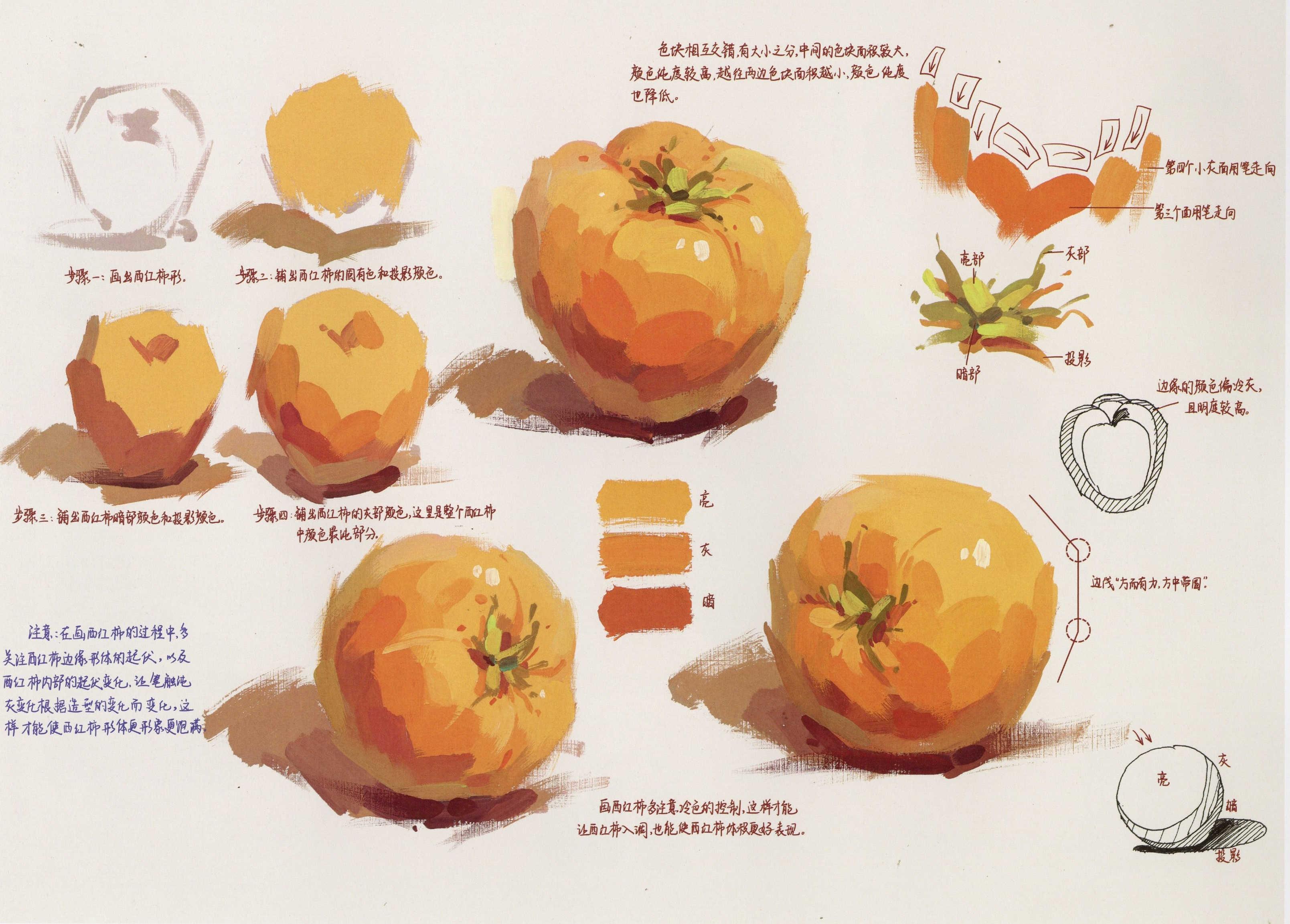 水粉画西红柿的画法单体步骤详解(1)