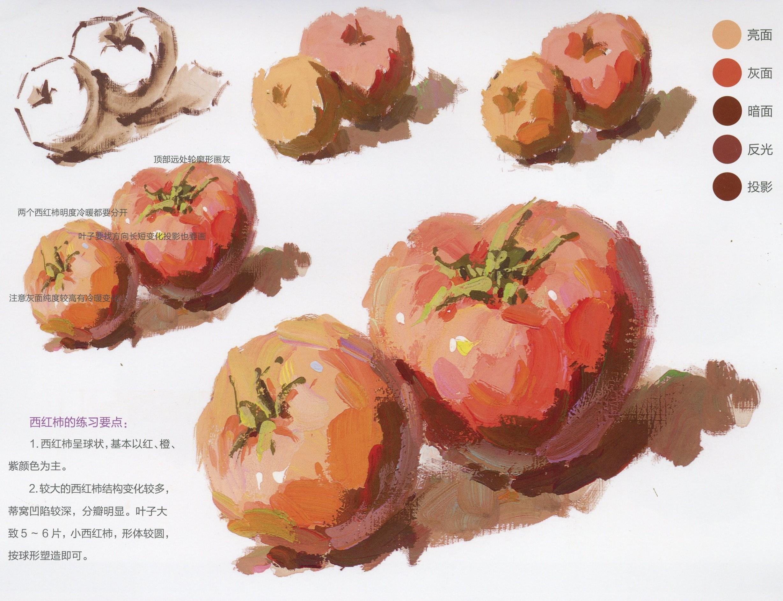 水粉画西红柿的画法单体步骤详解(2)