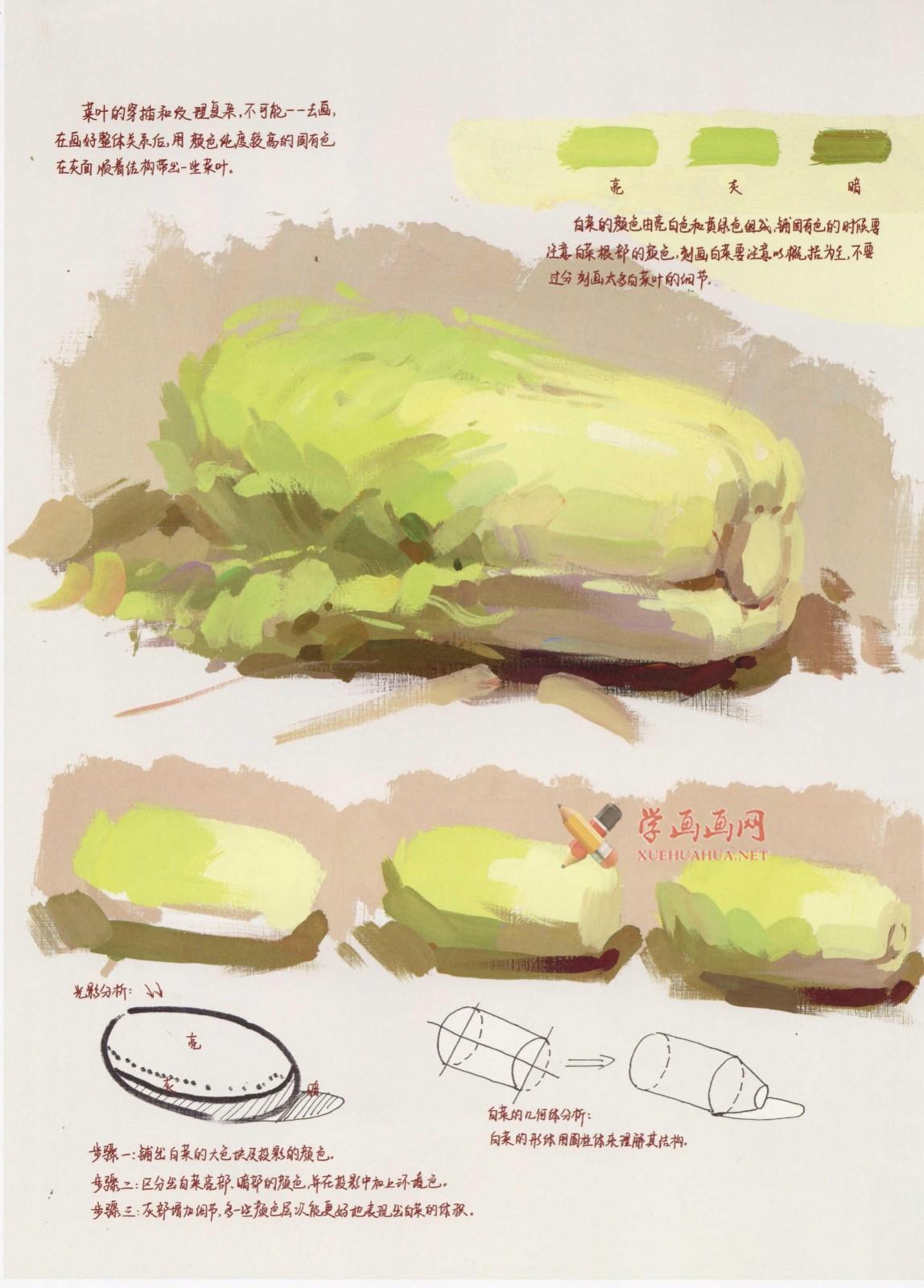 怎么画大白菜?水粉画单体入门教程:大白菜的画法图解及高清范画临摹图片素材(2)