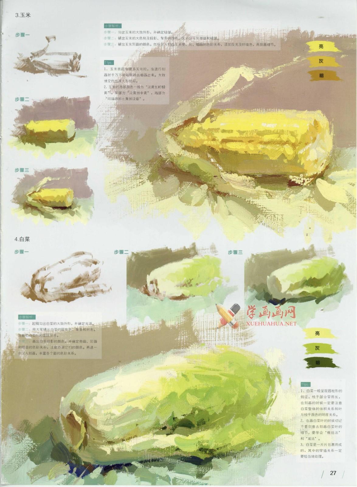 怎么画大白菜?水粉画单体入门教程:大白菜的画法图解及高清范画临摹图片素材(3)