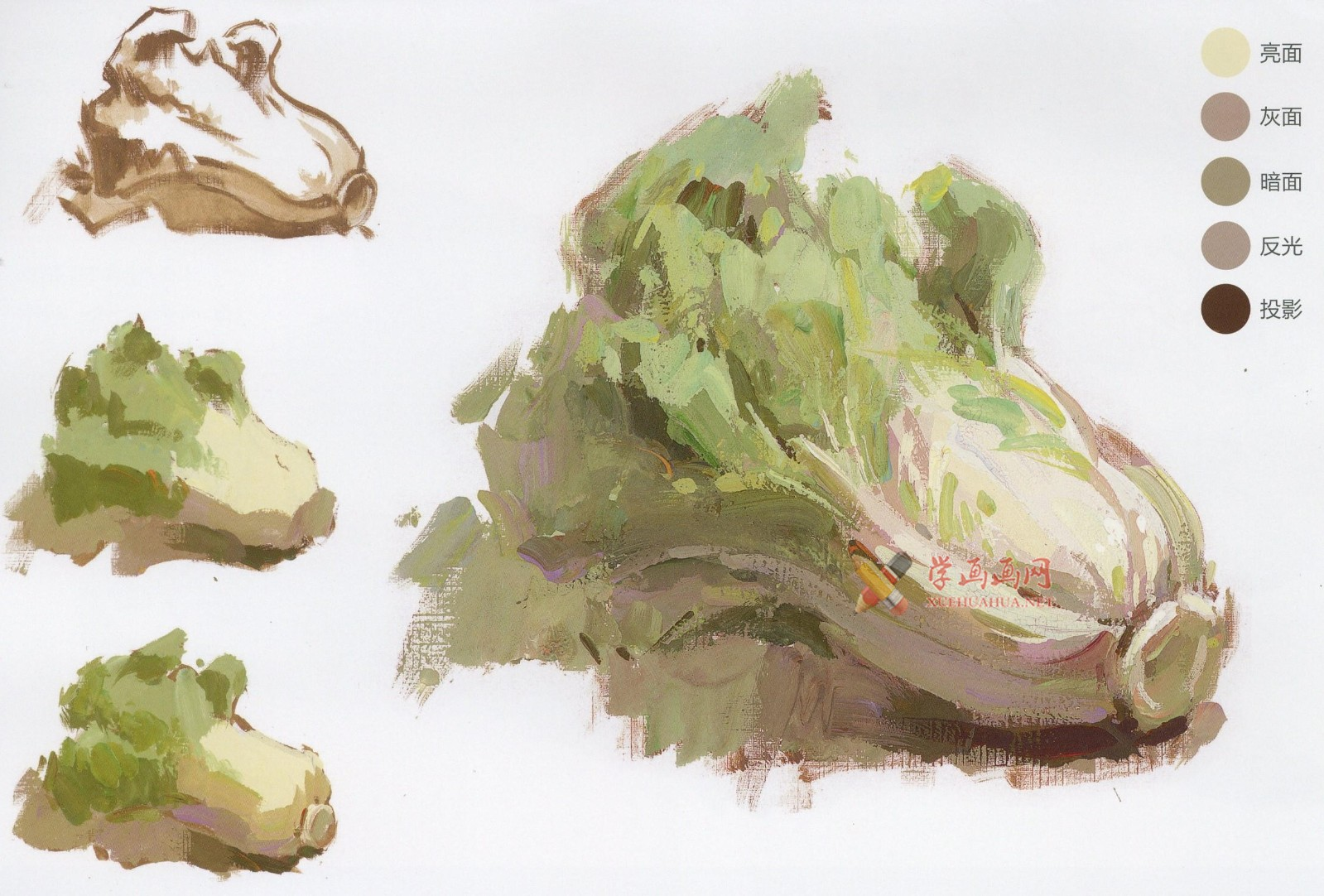 怎么画大白菜?水粉画单体入门教程:大白菜的画法图解及高清范画临摹图片素材(5)